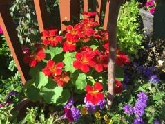 Char's Garden